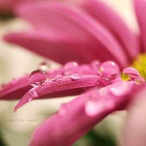 Macro Photography Water Drops