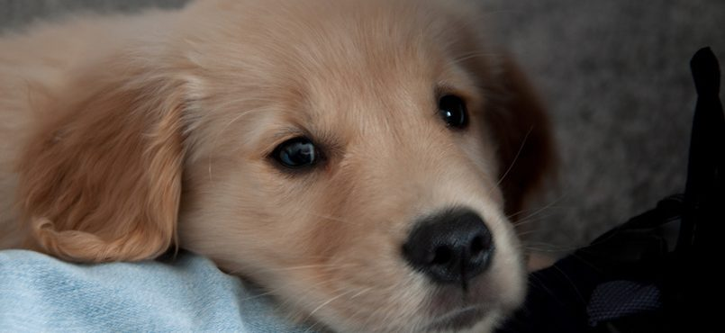 Feel Like Crying Heres 36 Photos Of The Cutest Puppies Youll Ever
